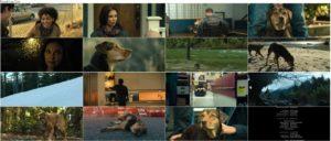 اسکرین شات فیلم مسیر بازگشت یک سگ به خانه