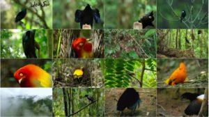 اسکرین شات مستند رقص پرندگان