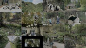 اسکرین شات مستند پانداها