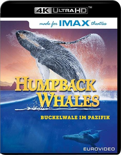 دانلود مستند Humpback Whales نهنگهای کوهاندار 2015