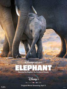 دانلود مستند Elephant فیل 2020 با زیرنویس فارسی